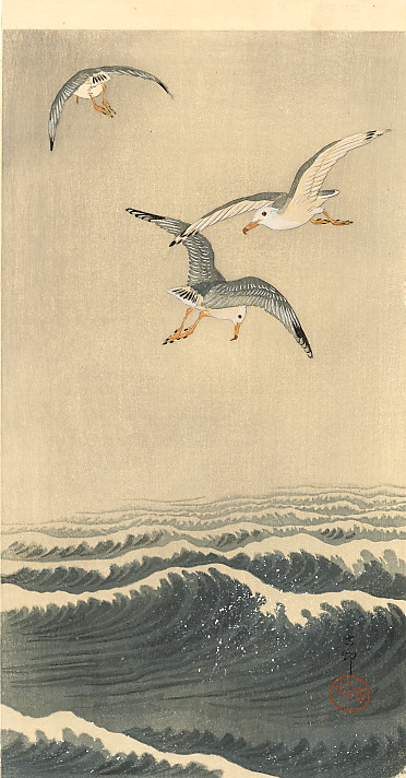 seagulls-over-the-waves